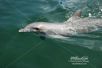 Dolphin_4