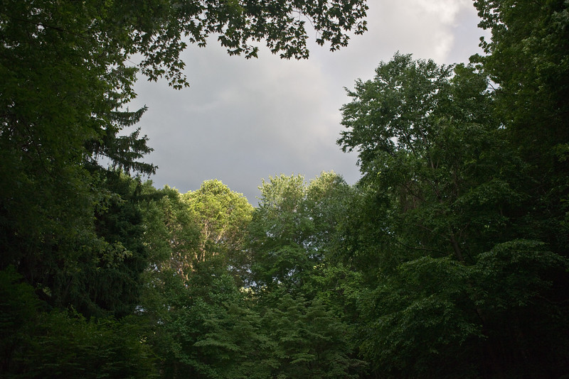 Forest Trees Wide Angle