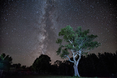 284x Tree of Life