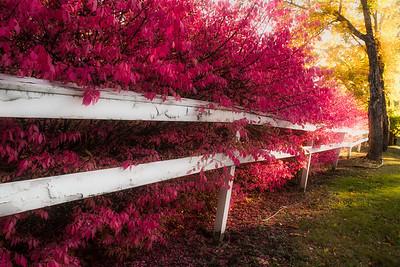 #682 Fall Somesville