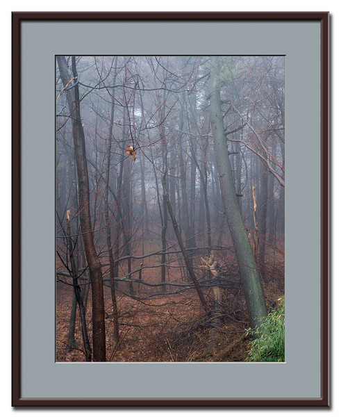 """""""Mist in the Woods"""""""