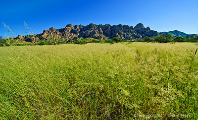 """Fields of Plenty"", Dragoon Mountains, Az., 09/04/10."