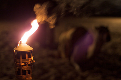 Tiki flame and camels – Dubai, UAE