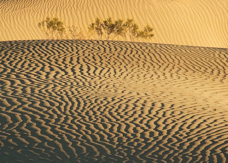 Dunes with Flora, Death Valley, California