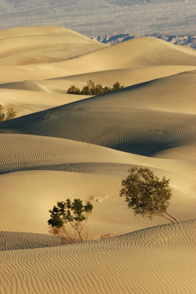 Death Valley dunescape 1, California