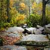 Dupont Forest  Western North Carolina