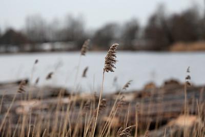 Reeds DxO