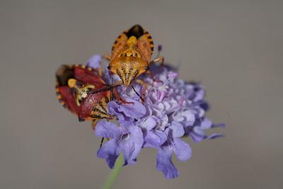 Bugs CR2