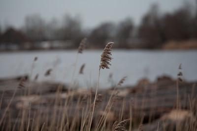 Reeds DNG