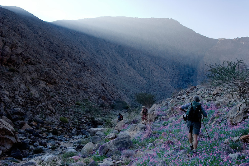 Wild flowers on Jebel Sumaini<br /> Oman