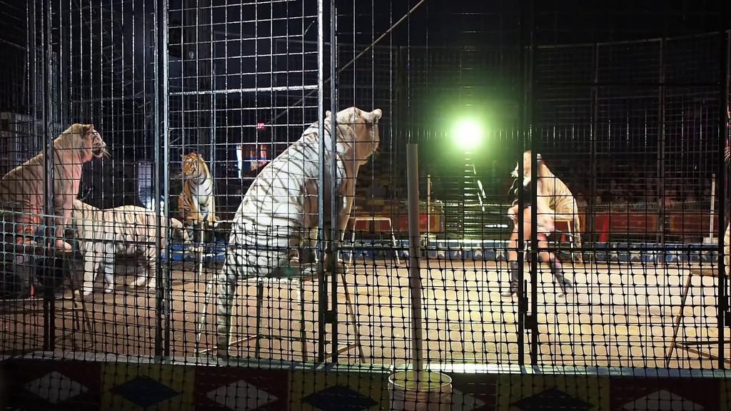 1405_Cole Bros Circus_014