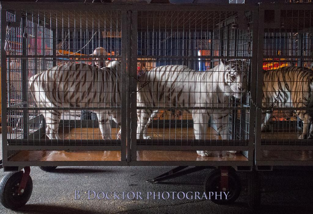 1405_Cole Bros Circus_009