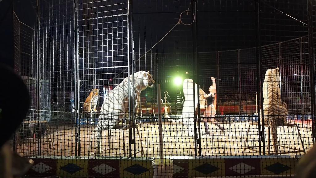 1405_Cole Bros Circus_015