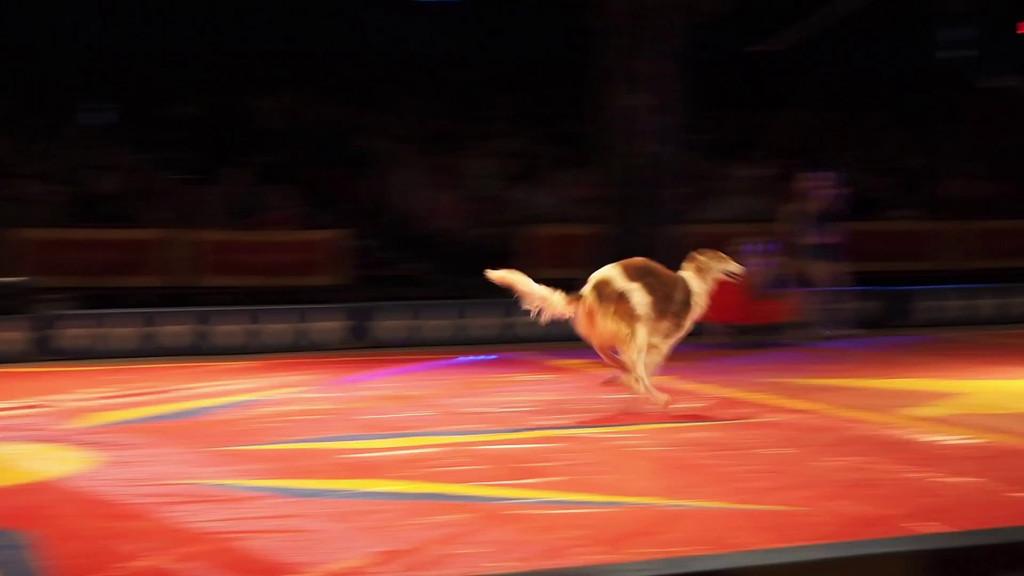 1405_Cole Bros Circus_039