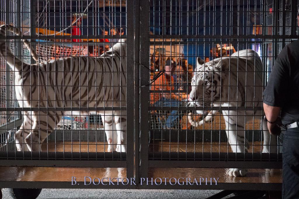 1405_Cole Bros Circus_007