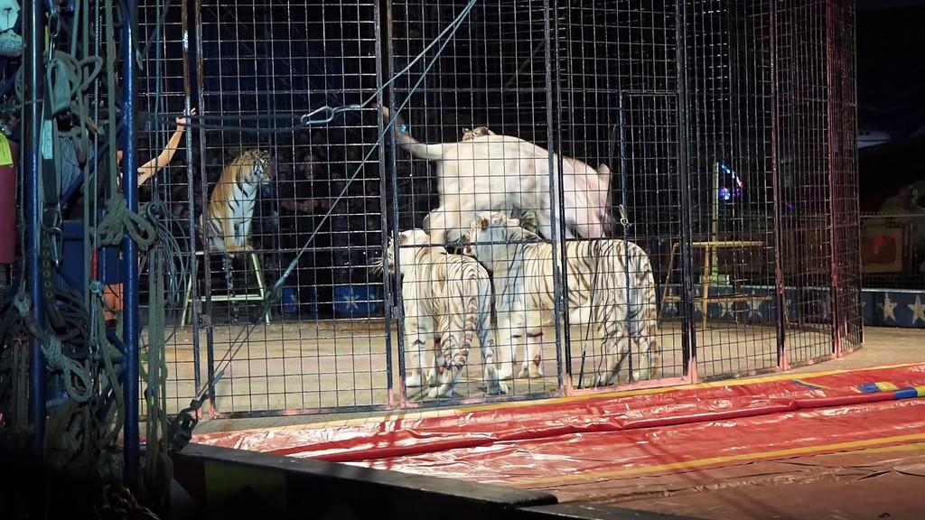 1405_Cole Bros Circus_012