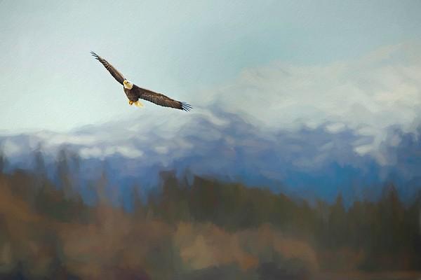 Bald Eagle Soaring over Lake Conroe in Texas