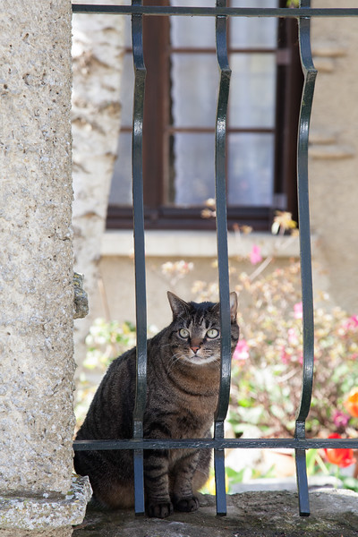 French Chat<br /> Giverny, France