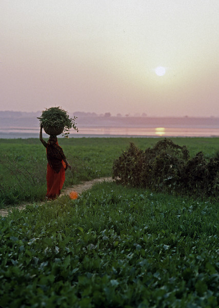 If you are free of attachment, you will lead a simple life in a simple environment. —Neem Karoli Baba <i>L1343 Ganges River near Allahabad</i>