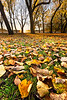 Autumn Leaves in the Meadows