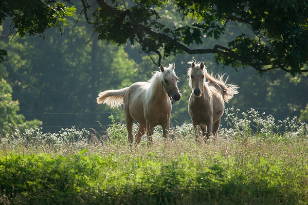 horses6_06_11