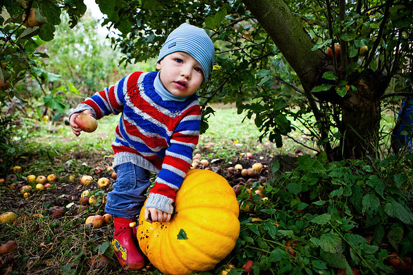 Pumpkins, Apples and little Boys, Leipzig, Germany