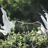 tug-of-war..stork style