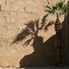 Palm at Karnak