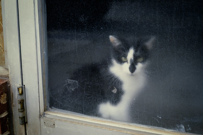 cat+door-ec1-24-t3552