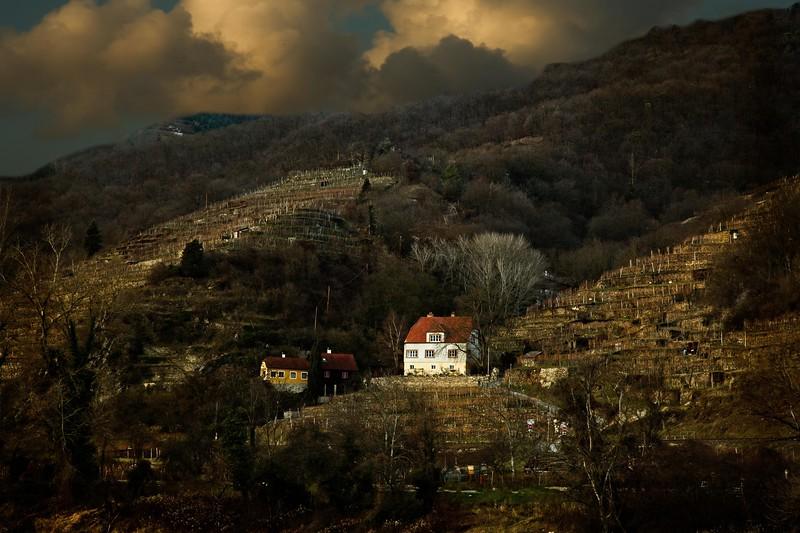 Hillside vineyard, Wachau Valley, Austria.<br /> © Cindy Clark