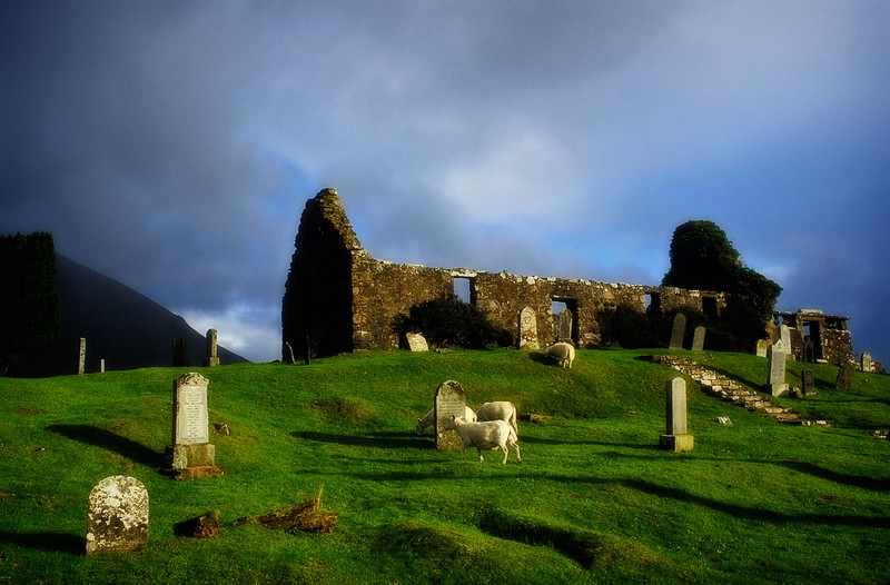 Sheep take charge of an abandoned church near Broadford on the Isle of Skye, Scotland. Photo © Carl Clark