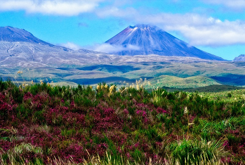 Ngauruhoe volcano in the distance at Tongariro National Park on the north island of New Zealand.<br /> Photo © Carl Clark