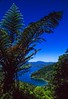 A tree fern dominates the sky over Mistletoe Bay on Marlborough Sound in New Zealand.<br /> Photo © Carl Clark