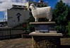 A tribute to Romney sheep in the town of Gore on the south island of New Zealand. Factoid: As of 2014 the ratio of sheep to humans in New Zealand was 7 to 1. <br /> Photo © Carl Clark