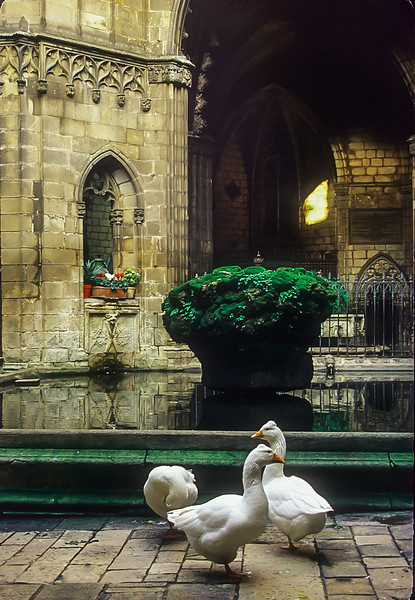 Three of the thirteen geese kept at the Barcelona's Cathedral of the Holy Cross and St. Eulalia, co-patron saint of Barcelona.  This was taken in the Gothic cloister. The number of geese is explained by the assertion that Eulalia was thirteen when she was martyred.  This cloister was completed in 1448.<br /> Photo © Cindy Clark