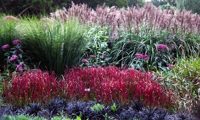 Beautiful Blarney Gardens