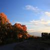 Changing colors in the Rio Grande bosque<br /> Albuquerque, NM<br /> 10/21/12