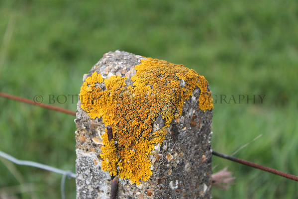 English Countryside fence post.