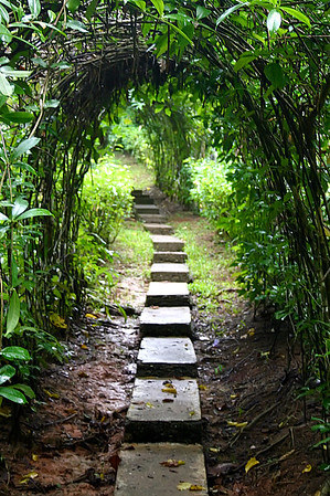 Path in Costa Rican jungle near Drake Bay