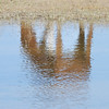 "Corolla's wild Spanish mustangs<br /> <br />  <a href=""http://www.wildhorsesofcorolla.com/"">http://www.wildhorsesofcorolla.com/</a>"