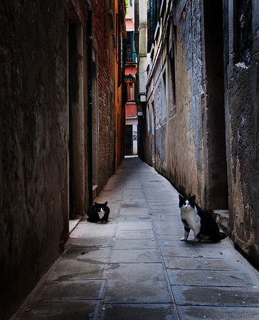 Venice Alley Cats