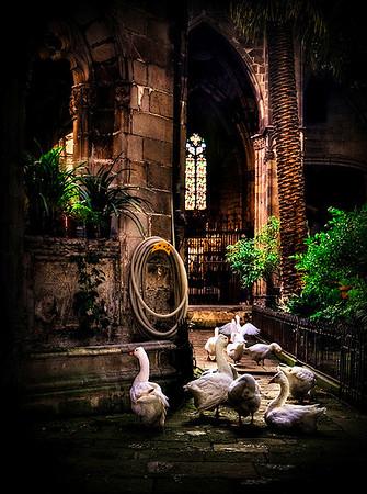 Cathederal Garden Geese