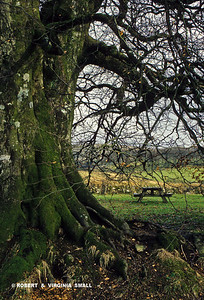 PEACEFUL PICNIC SPOT, ENGLAND