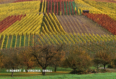 PATCHWORK VINEYARDS - GERMANY