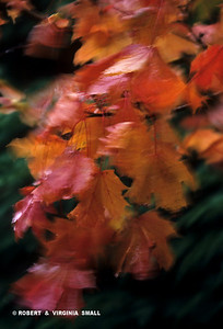 AUTUMN LEAVES IN THE WIND - GERMANY