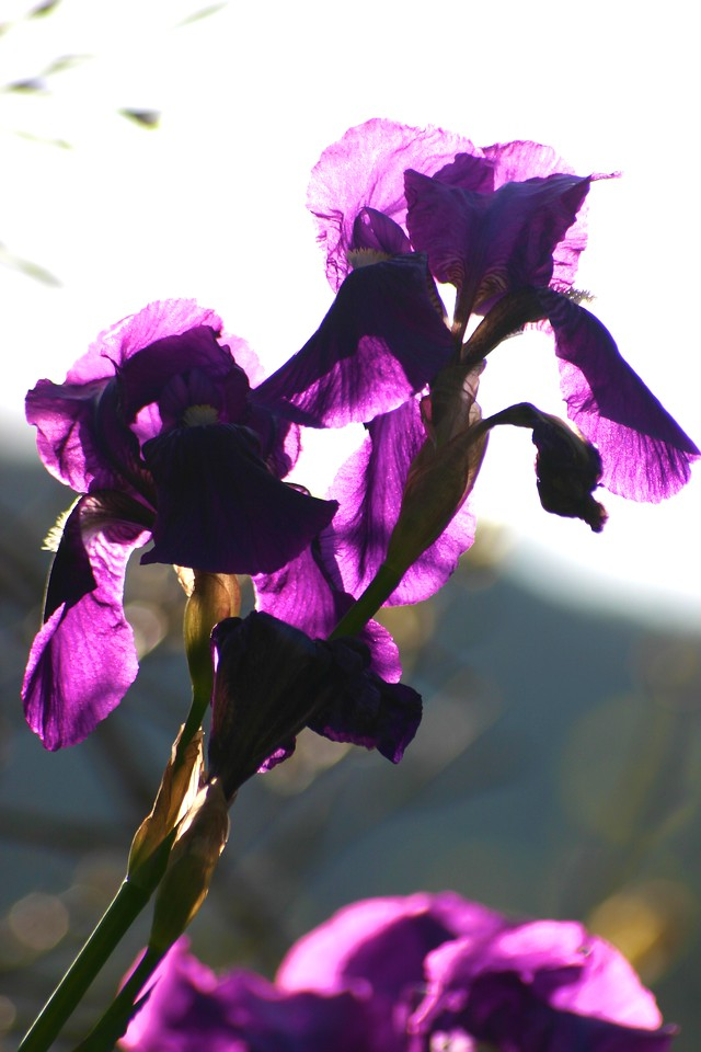 flowers near Vernazza