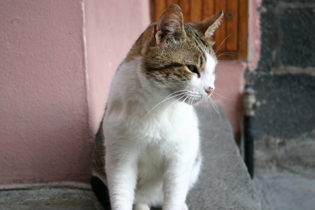 town kitty- Vernazza