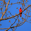 The trees are budding, and the cardinals are singing.