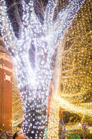 Lights 07