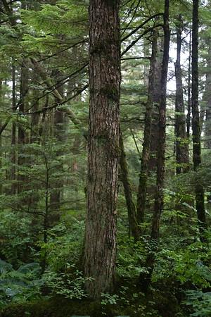 Juneau 578